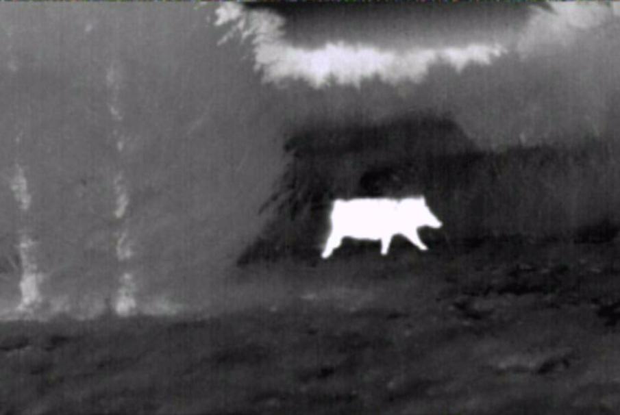 Ukázka obrazu termovize v noci.
